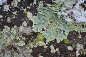 22 common plant diseases Gray Mold