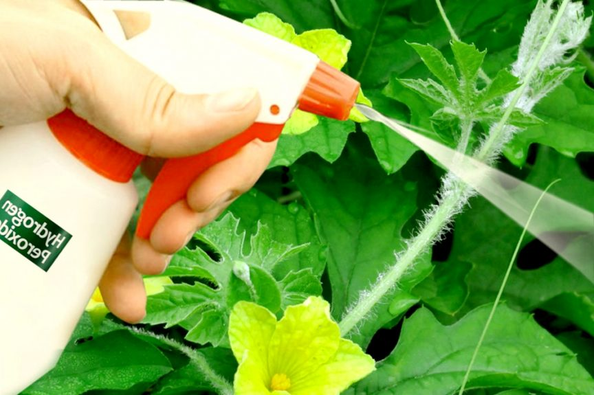 put hydrogen peroxide on your plants and this will happen gardening tips gardening fever - Garden Fever