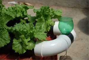 Hydroponics For Home Diverse