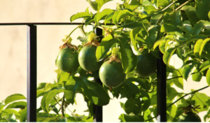 Plant food numbers Lush Chlorophyll enhanced by the Nitrogen Nutrient in Plant Foods