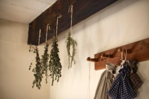 Seed saving plants upside down drying out