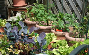 small space gardening various plants in pots