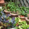 Small space gardening, Gardening in pots