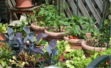 Small space gardening, Gardening in pots