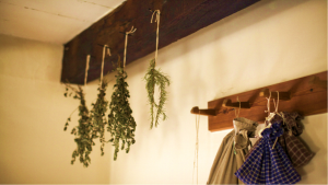 how to make essential oils from dried herbs drying process
