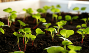 how to germinate seeds in steps healthy seedlings