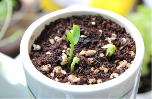 how to germinate seeds in steps ideal requirements