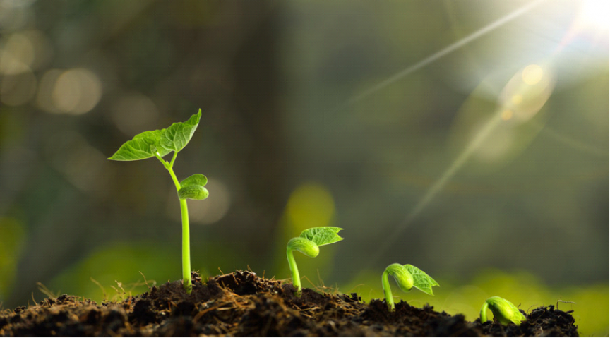 how to germinate seeds in steps step by step germination