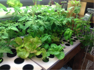 pros and cons of hydroponics plants in a controlled environment