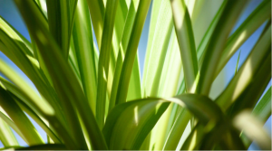 dehumidifying plant spider plant