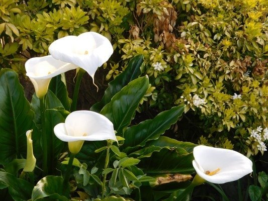 Plants that absorb Carbon Dioxide Peace Lilly