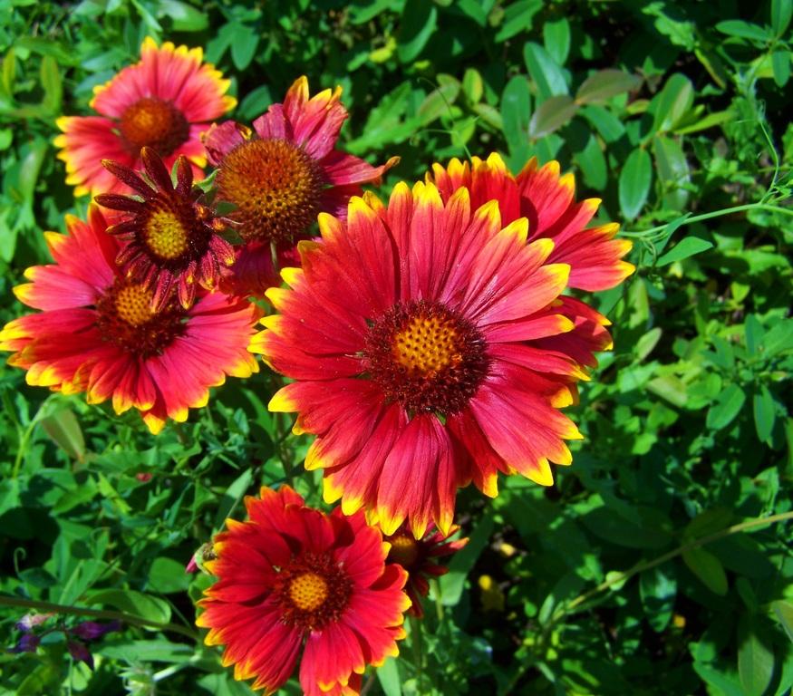 6 best indoor plants for anxiety Gerbera