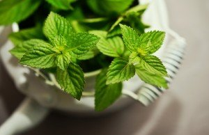 6 best indoor plants for anxiety peppermint