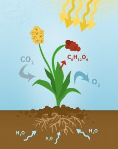 plants that absorb carbon dioxide diagram of plant absorbing carbon dioxide