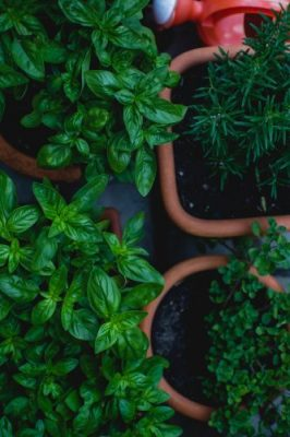 Herb Gardening for Beginners 2
