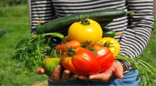How to start a vegetable garden from scratch organic produce