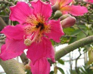 Citranatal Plants 12 Best Mosquito Repellent Plants 2