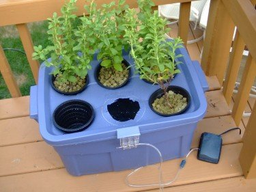 Hydroponics at home Deep water culture system