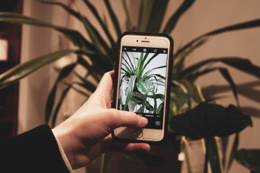 best gardening apps man photographing a plant