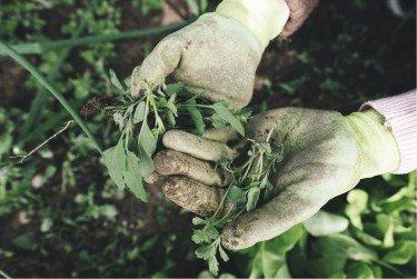 best gardening apps woman with gardening gloves