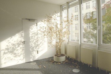 How to revive a dead plant wilted indoor tree