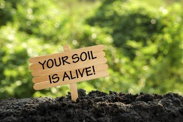 Soil Biology Your soil is alive