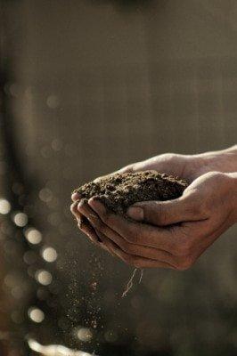 Soil Biology Soil