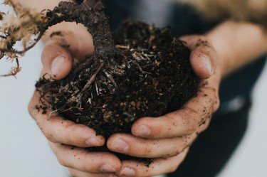 Soil Biology The Life Cycles within Soil 1