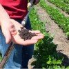 Soil Health Easy Beginners Guide With Pictures 2