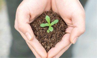 Soil health Plant in healthy soil