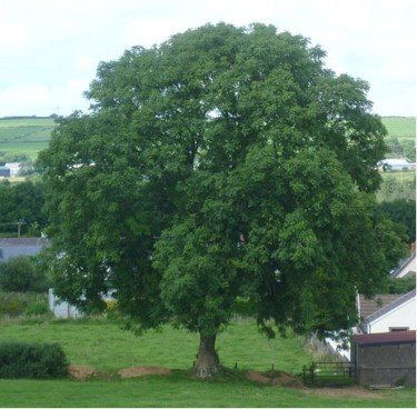 Tree Meanings- Their Essence And Symbolism 1
