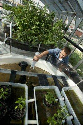 aquaponics gardening hydroponic system