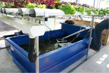 Aquaponics gardening an illustration of a hydroponic system