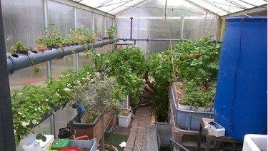 aquaponics gardening aquaponic system