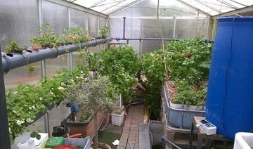 Aquaponics Gardening Easy Guide For Beginners 2