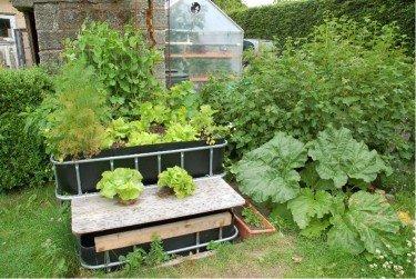 aquaponic gardening hydroponic vegetables