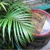 How To Collect Rainwater For Gardening (Must Read) 3
