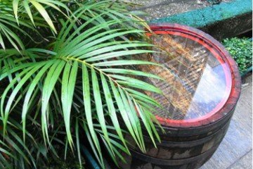How To Collect Rainwater For Gardening (Must Read) 2