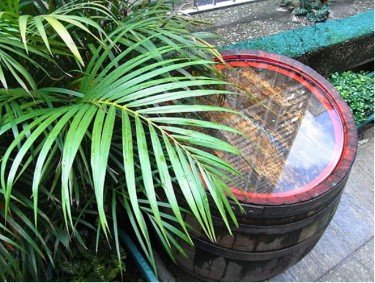 how to collect rainwater for gardening wood barrel