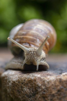 what attracts slugs snail on a rock