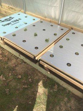 kratky hydroponic lettuce floating raft
