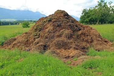 pile of composed manure