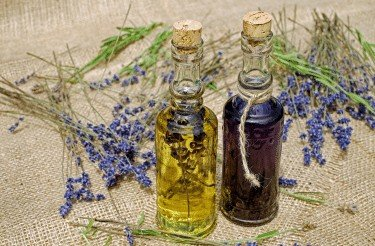 How To Make Lavender Essential Oil Easy (DIY) 1