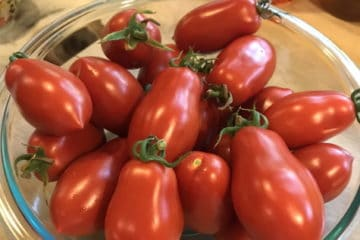 Your All About Roma Tomatoes Guide 5