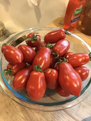 roma tomatoes in a bowl