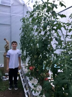 roma tomatoes in a greenhouse with my son