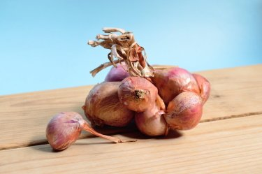 growing onions demystified shallots