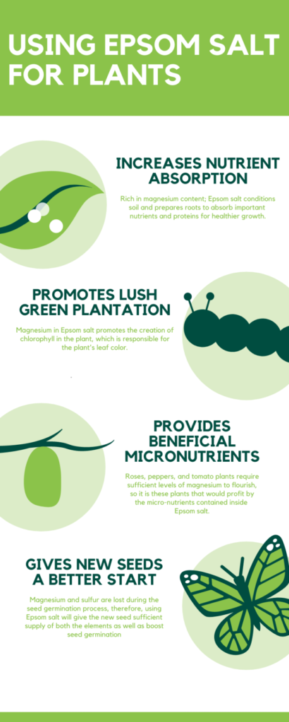 using epsom salt for plants info graphic